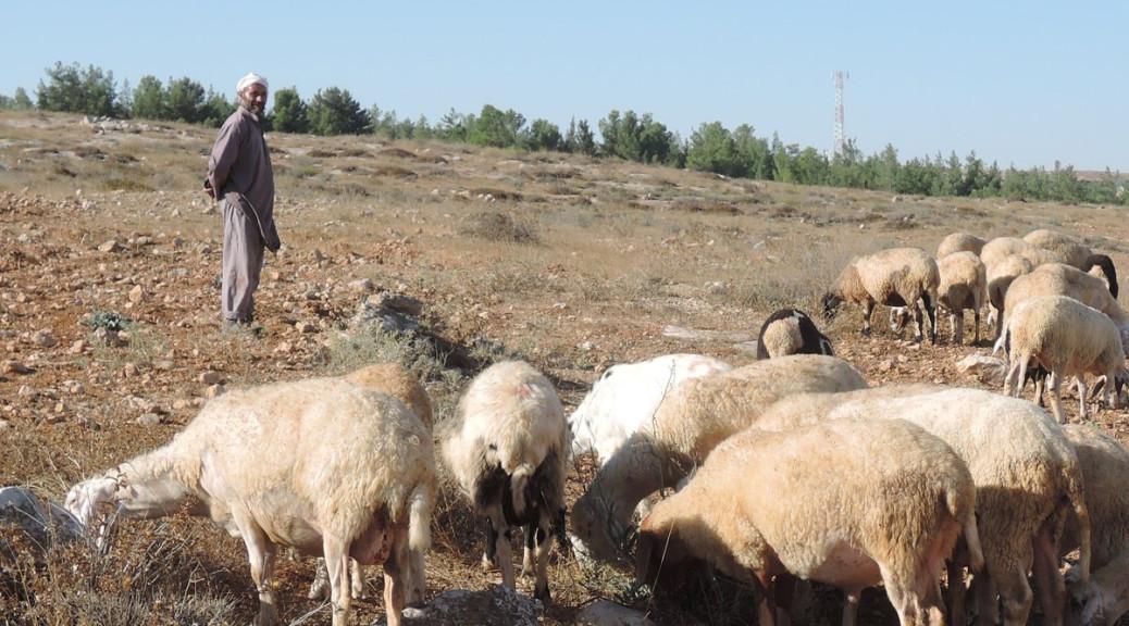 Khaled mit Schafen